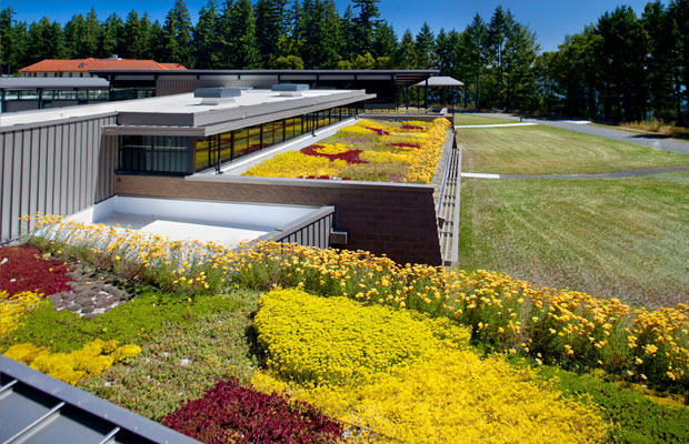 american-lake-va-nursing-home-green-roof
