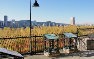 Multnomah County Building Green Roof