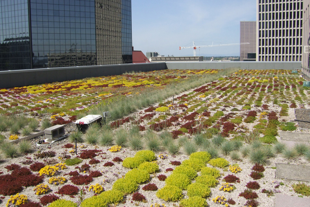 PDX Green Roof01